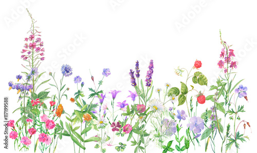 Panoramic view of wild meadow flowers and grass on white background, watercolor painting, realistic illustration © analgin12