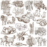 Agriculture.Farming.Life of farmer.Agricultural set.Collection of hand drawing illustrations.Pack of full sized hand drawn illustrations.Set of freehand sketches.Line art technique.Drawing on white. - 117215304