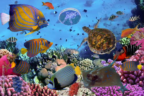 Tuinposter Koraalriffen colorful coral reef with many fishes