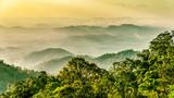 Regenwald in Malaysia - 117263709