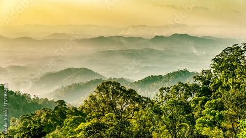 Plakat Regenwald in Malaysia