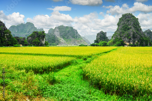 Amazing view of bright green rice fields among karst mountains