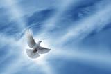 Beautiful Dove symbol of faith - 117326141