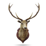 deer horns.