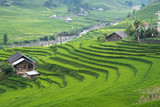 Agriculture Green Rice fields and rice terraced on mountain