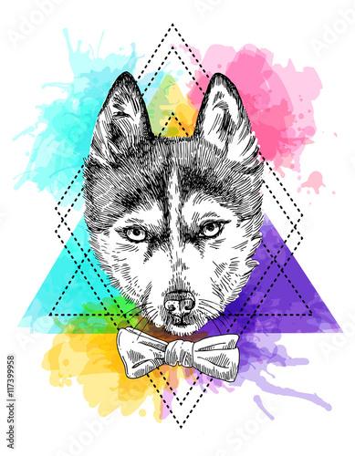 Fototapeta sketch of husky