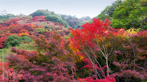 Fototapeta Colorful Autumn leaves at Mount Rokko in Kobe Japan