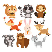 Woodland Animal Concept Represented By Cute Squirrel Raccoon Beaver Fox Rabbit Reindeeer Skunk Bear Wolf Cartoon Icon Colorfull And Flat Illustration  Sticker