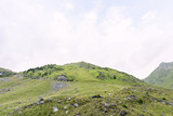 Photo of green capra peak, and a field full of sheeps grazing in fagaras mountains, Romania.