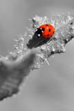 ladybird - 117461104