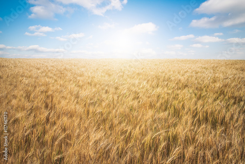 Wheat Farm with Great Sky Poster