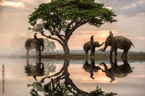 Plakat Three elephants.