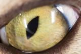 yellow cat eyes. super macro