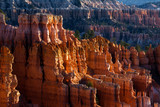 Sun Kissed Hoodoos and Pine Trees in Bryce Canyon