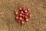 Flacourtia fruit on sand