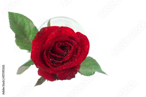Staande foto Roses Closeup top view red rose color water glass on white background, love and romantic concept, selective focus