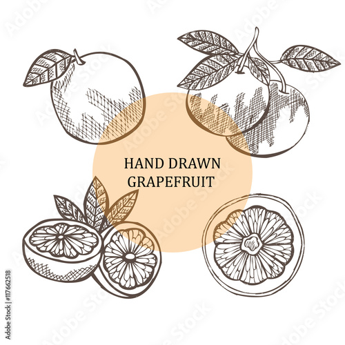 hand drawn grapefruits - 117662518