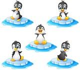 Penguin cartoon set collection