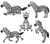 Zebra cartoon set collection