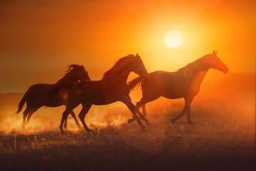 Konie przy zachodzie słońca