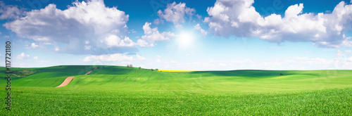 Green field under blue sky - 117721180