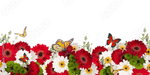 Beautiful daisies and butterfly, flower, floral background
