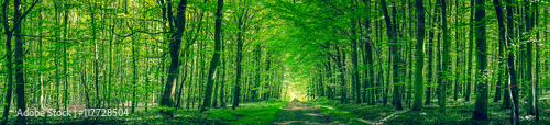 Staande foto Groene Panorama scenery with a road in a forest