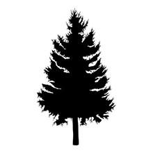 Dibujado a mano ilustración vectorial de abeto árbol. Silueta del árbol de pino negro.