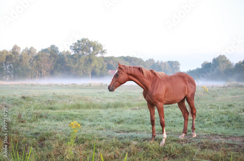 horse on morning pasture