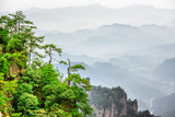 Wonderful view of trees growing on top of rock, Avatar Mountains
