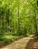 Wald Weg Bäume Blattwerk Grün