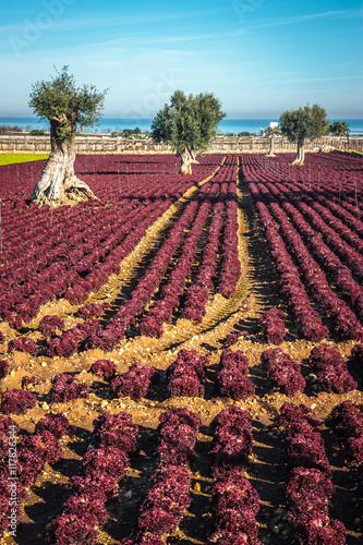 Keuken foto achterwand Crimson Colorful landscape in Puglia