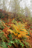 Autumn scenery in the forest with ferns