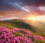 Mountain landscape with pink flowers at sunset
