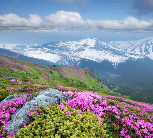 Obraz na Plexi Summer landscape with pink flowers in the mountains