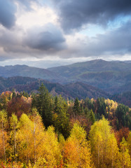 Autumn Landscape with birch forest in the mountains © Oleksandr Kotenko