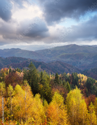 Autumn Landscape with birch forest in the mountains