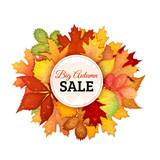 Autumn leaves sale vector