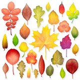Colorful leaves set on white background