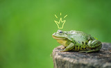 Fototapety Cute frog princess or prince. Toad painted crown, shooting outdoor