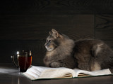 Gray big cat lies on the open book. Nearby stands a cup of tea or coffee