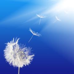 Image of dandelion closeup
