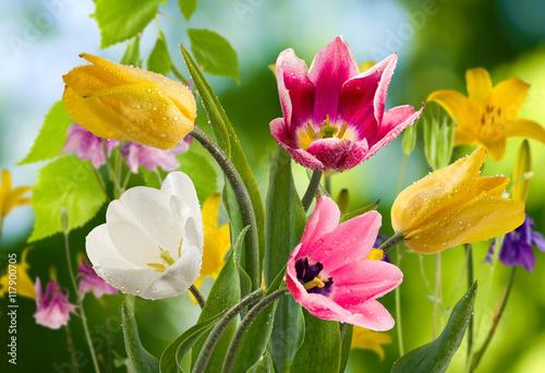 Zdjęcia na płótnie, fototapety na wymiar, obrazy na ścianę : image of beautiful flowers in the garden closeup