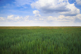 Virgin ukrainian steppe landscape with green and yellow grass and cloudy sky