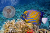 Colorful coral reef with many fishes and sea turtle - 117987935