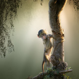 Baby Baboon in tree