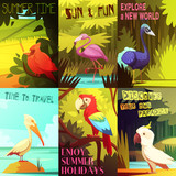 Exotic Birds 6 Posters composition Poster