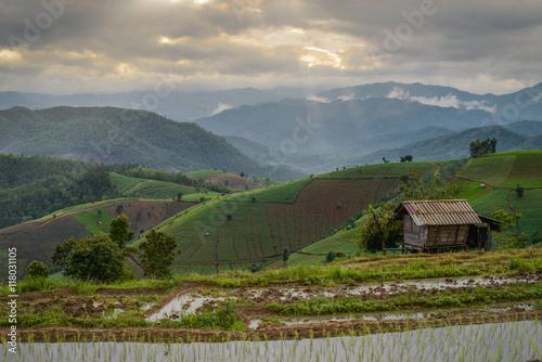 Fotobehang Ban Pa Pong Piang rice terraces field in Chiangmai province of Thailand.