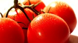 Tomatoes at the table