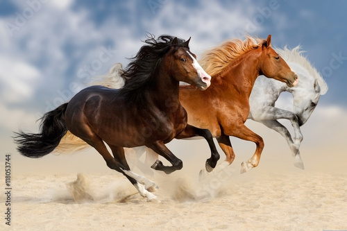 Fototapeta Three horses run gallop in dust
